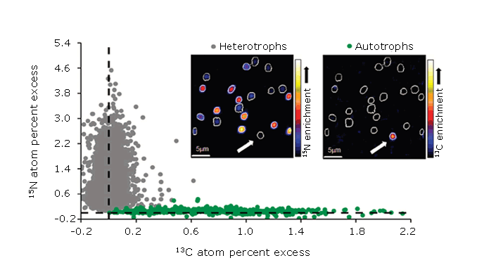 NanoSIMS isotope analysis: C and N uptake by marine microorganism